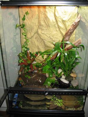 Frog Enclosure