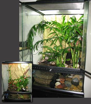 My Backyard New Frog Enclosure