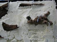 expanding_foam